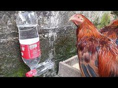Pvc Chicken Waterer, Chicken Water Feeder, Automatic Chicken Waterer, Chicken Feeders, Backyard Chicken Coops, Chicken Coop Plans, Diy Chicken Coop, Chickens Backyard, Homemade Chicken Waterer