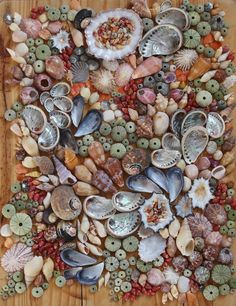 WOW!! Amazing huge shell collection from big to small - urchins, abalone, limpets! Click to find out what beach these were found at!