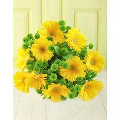 Yellow Gerberas n Sprays in Cellophane