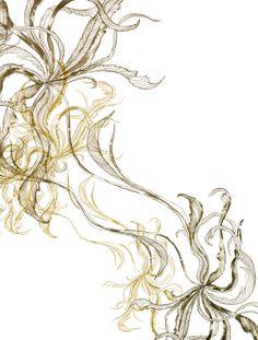 Piet Boon Styling by Karin Meyn | Hand drawn Amaranthus flower