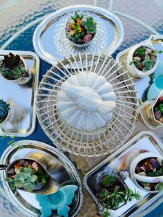 The Beehive Cottage: Miniature Tea Cup Succulents