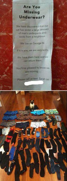 CAT WHY