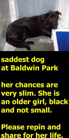 MURDERED . SHAME ON HUMANITY 10/18/15- My name is Xing Xing. I am a 9 yr old female black Chow/Lab mix. My family left me here on Sept 22. available now. Obviously very overwhelmed and sad and in tears. Baldwin Park shelter https://www.facebook.com/photo.php?fbid=1036481186363718&set=a.705235432821630&type=3&theater