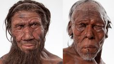 Neanderthal and human Charles Darwin, Cave Bear, Early Humans, Human Evolution, Animal Bones, Archaeological Finds, Prehistoric Animals, Adam And Eve, Genetics