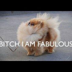 Love this!!! Pomeranian