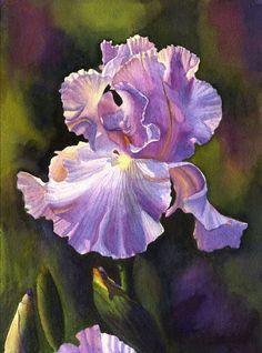 Purple Iris art aquarelle impression par Cathy Hillegas, 8 x 10, aquarelle orchidée florale, rayonnante, lilas, bleu, or, jaune, vert