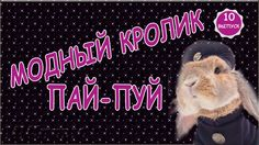 Модный кролик Пай - Пуй