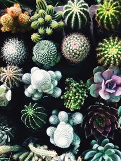 A cacti (and succulent!) collection.