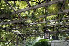 grapevines on trellis above the hot tub. throwback to the old mesa house.