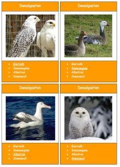 Vogelkwartet - MontessoriNet