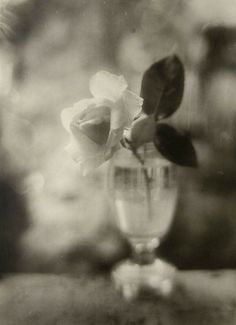 By Josef Sudek. (Rose in a Glass - 1950).