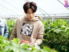 [INFINITE Official]  딸기나라의 성규 (SungKyu in Strawberry Land) #INFINITE #SungKyu