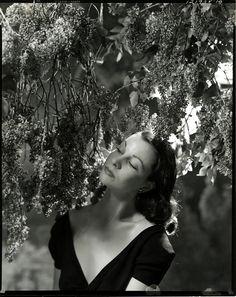Vivien Leigh ~ by Cecil Beaton