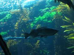 Grouper fish swims by...
