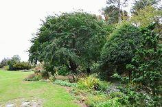 I uploaded new artwork to fineartamerica.com! - 'Norfolk Botanical Gardens 10' - http://fineartamerica.com/featured/norfolk-botanical-gardens-10-lanjee-chee.html