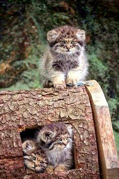 Cute Animals In The World; Persian Cats And Kittens For Sale her Cute Animals Funny Pictures Nature Animals, Animals And Pets, Animals Images, Farm Animals, Beautiful Cats, Animals Beautiful, Beautiful Babies, Kittens Cutest, Cats And Kittens