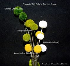 Emerald Green New Color Craspedia Billy Balls-Billy Buttons-Emerald Green Wedding Flowers