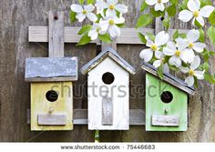 stock photo : Three cute little birdhouses on rustic wooden fence with beautiful white Dogwood blooms on them