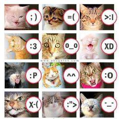 57 Ideas memes funny faces facial expressions grumpy cat for 2019 Smileys, Cute Cats, Funny Cats, Funny Animals, Cute Animals, Funny Smiley, Grumpy Cat Meme, Cat Memes, Crazy Cat Lady