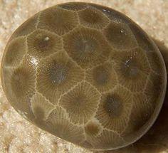 Petoskey stone.