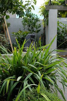 Andy Ellis' tips for growing native New Zealand plants in your backyard Architecture Student, Landscape Architecture, All Blacks Shirt, Singapore Garden, Flower Show, Native Plants, New Zealand, Nativity, Backyard