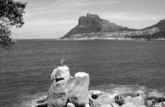 Hout Bay's Leopard perched on a rock beneath the start of Chapman's Peak Old Pictures, Cape Town, Monument Valley, South Africa, Mount Rushmore, Pepsi Cola, Tours, Rock, Mountains
