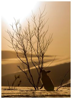 Undo the Dry Spell: Deserts, Canyons and Stone 4  Desert Hare