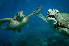 High five turtles!