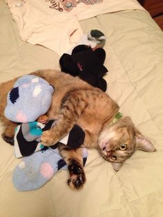 For some cats it's catnip. For our cat it's something else... - Imgur