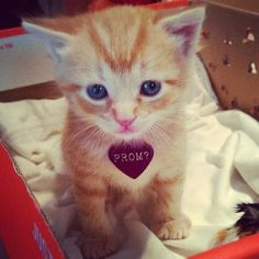He Was My Prom Date Cats Pinterest Prom And Cat - Guy gives up finding prom date and decides to take his cat instead