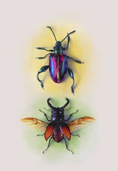 Beetle Study by Morgan Davidson