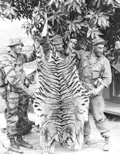 U.S. Special forces soldiers with a tiger skin! ~ Vietnam War