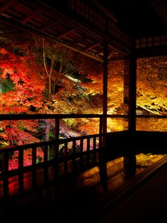 瑠璃光院 - 秋の夜間特別拝観 / Rurikou-in Komyo-ji Temple | Flickr - Photo Sharing!