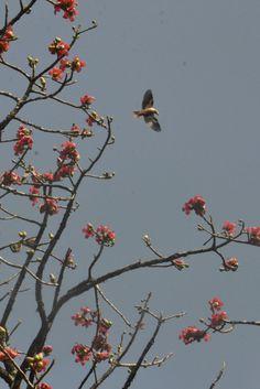 Dandeli, Karnataka