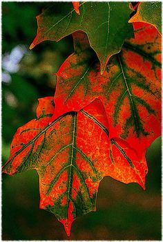 Fall is begging for us to dance and sing and write with just the same drama and blaze. ~Shauna Niequist,