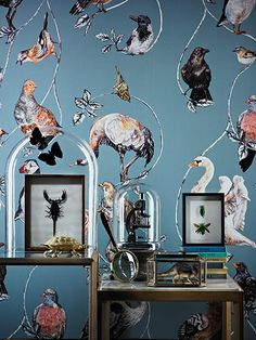 Credit: Stephen Lenthall Wallpaper by House of Hac...