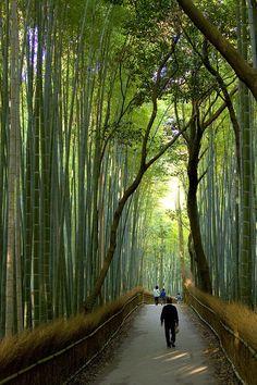 Bosquet de bambous à Kyoto