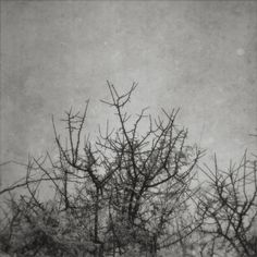 Zahrada Photography