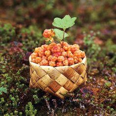 cloudberries in birch bark basket