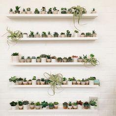 Succulent goals