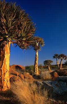 Wedged between the Kalahari and the South Atlantic, Namibia enjoys vast potential as one of the youngest countries in Africa. In addition to having a striking diversity of cultures and national origins, Namibia is a photographer's dream – it boasts wild seascapes, rugged mountains, lonely deserts, stunning wildlife, colonial cities and nearly unlimited elbow room. Read more: http://www.lonelyplanet.com/namibia#ixzz3ASwJ9t70