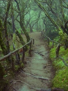 Mercedeswald in Anagagebirge, Tenerife Forest Path, Magic Forest, Canary Islands, Pathways, Places To See, Beautiful Places, Scenery, Around The Worlds, Landscape