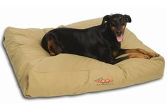 "Snooza's is a durable dog bed made from super tough 1000 denier fabric. It is waterproof, tough with a capital T, re-fillable and is perfect for dogs of all temperaments. Gift this to your ""tough"" ones today! Tough Dog Beds, Dog Beds For Small Dogs, Large Dogs, Cheap Dog Beds, Outdoor Dog Bed, Orthopedic Dog Bed, Dog Cushions, Medium Dogs, Pet Beds"