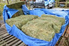 Tarps, pallets, ground tarps and yes, even commercial-sized dessicant pouches can all be used to keep your hay dry and prevent mold - learn what works best Horse Hay, Horse Barns, Horse Love, Horse Shelter, Horse Rescue, Raising Farm Animals, Small Barns, Goat Barn, Horse Care Tips