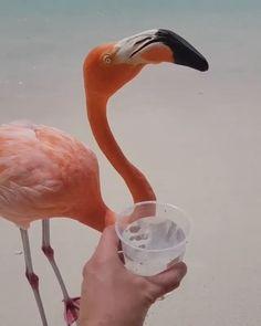 Flamingos on the beach! Thirsty in Aruba 🇦🇼 Video By 🌴 Pretty Birds, Beautiful Birds, Animals Beautiful, Cute Funny Dogs, Cute Funny Animals, Bird Pictures, Animal Pictures, Nature Animals, Animals And Pets