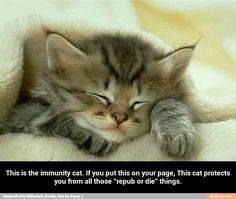This is the immunity cat. If you put this on your page, This cat...