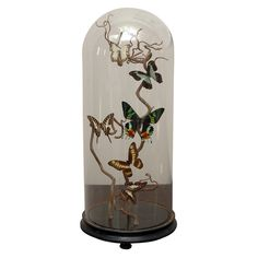 Specimen Butterflies in Antique Glass Dome | From a unique collection of antique and modern decorative objects at https://www.1stdibs.com/furniture/decorative-objects/