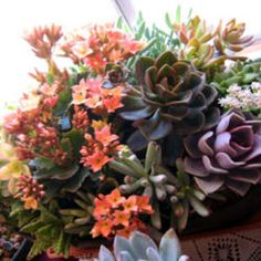 Beautiful grouping of succulents!