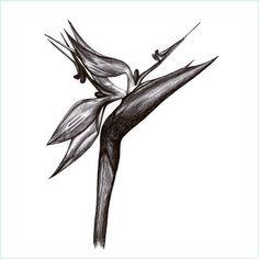 Strelitzia Bird Of Paradise Tattoo Paradise Tattoo Africa Tattoos