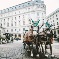 VIENNA, AUSTRIA. Love is in the air!   Thanks @gramypoohbooboo, this is such a great picture!  To share your photos on here, tag us with #wonderlustvienna.
